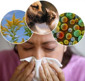 Людям с аллергиями