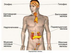 Патологии эндокринных органов