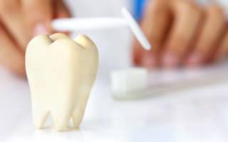 Муляж зуба