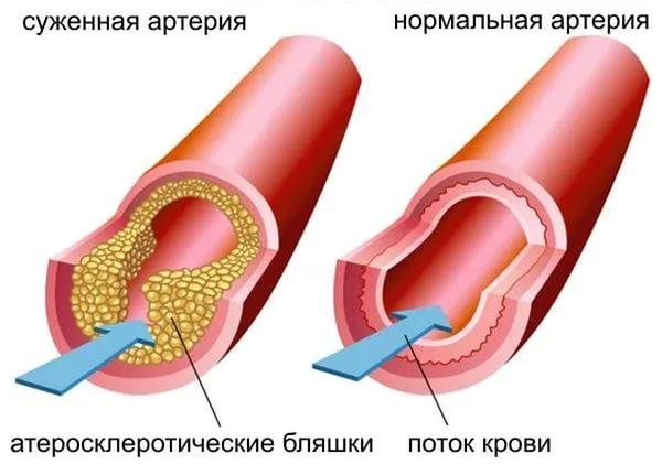 Функции холестерина