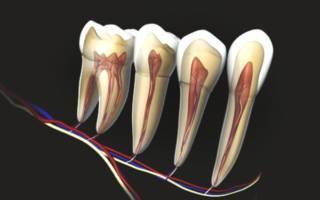 Функции зубных нервов