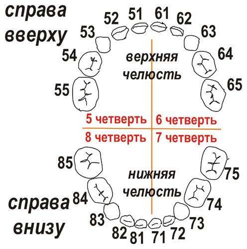 Схема нумерации зубов у ребенка