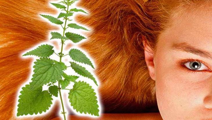 применение крапивы для волос