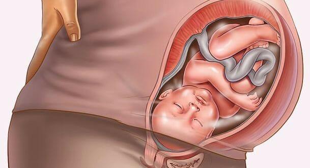 Изображение эмбриона в животе