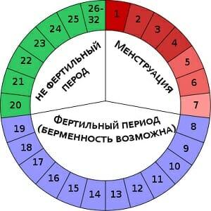 Середина цикла